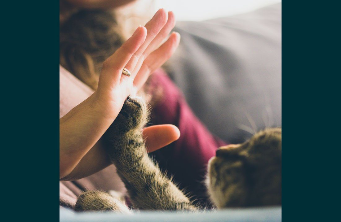 Woman giving a kitten a hive five